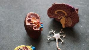 イケメンは4つの腎臓結石予防を意識している